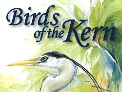 Birds of the Kern
