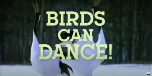 Birds Can Dance
